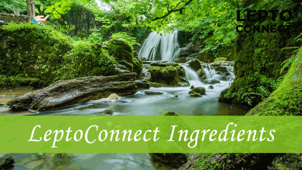 Leptoconnect ingredients